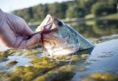 freshwater fishing tips