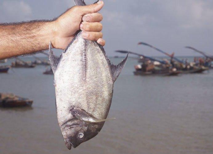 killer tips to kill a fish